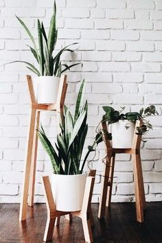 Cesta de Plantas Belice, Cestasde Plantas de Regalo, Cesta de Plantas de Decoración, Arte Floral, Floristería Online