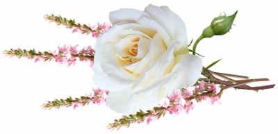 floristería online, floristeria vitoria, enviar centros de flores para nacimiento, enviar flores, envío de flores a domicilio baratas